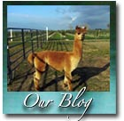 Alpaca Farm Blog